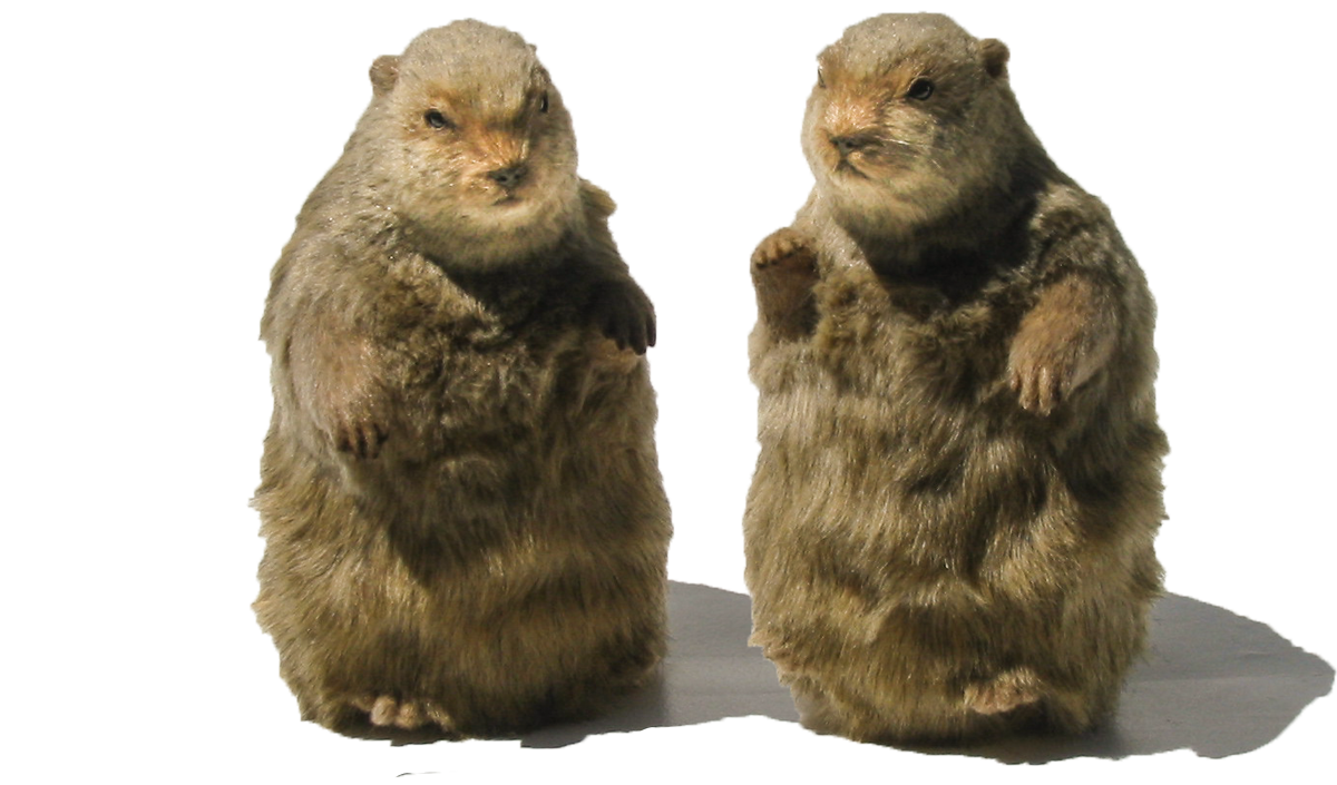 hamster-puppets-b-1200.png